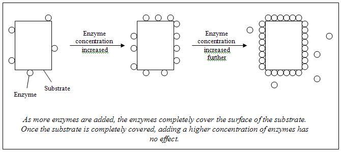 Conclusions Diagram